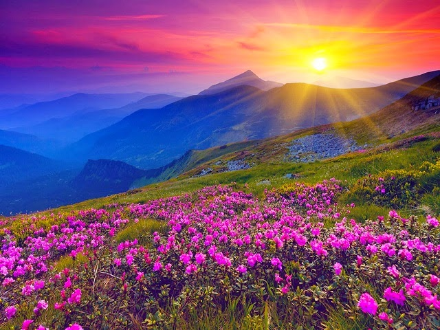The Valley of the flowers - UNESCO World Heritage Site