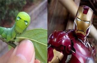 Lucu, Ulat Ini Mirip Dengan Iron Man