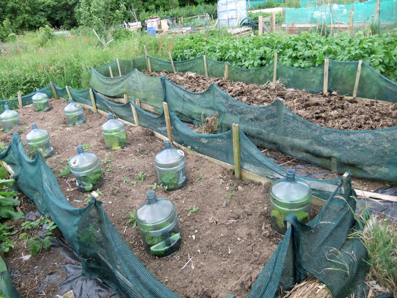 A Visit To The Kerrowkneale Allotment Garden Living And