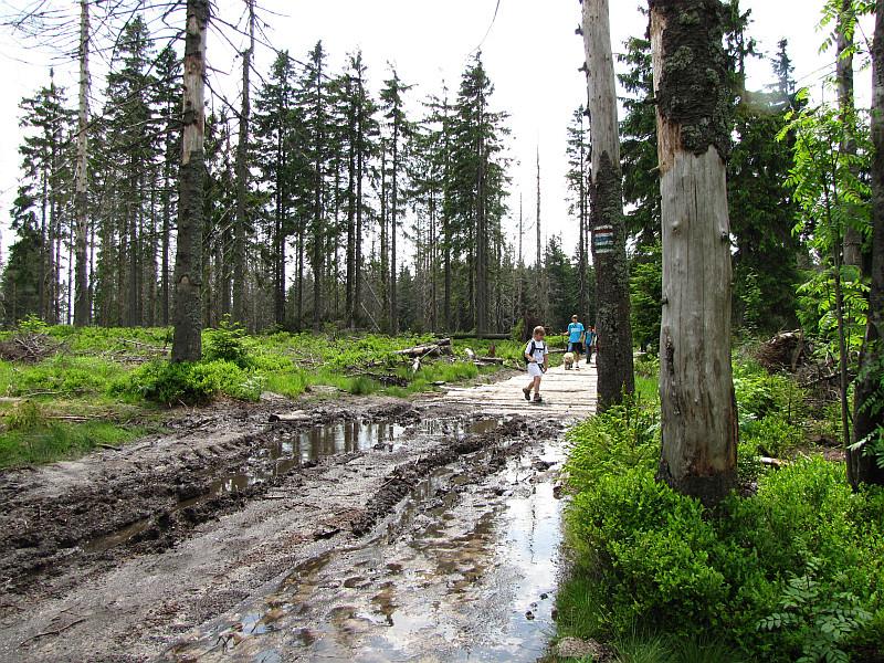 Na szlaku pojawia się kilka grzęzawisk, a ich pokonanie ułatwiają poukładane drewniane bale.