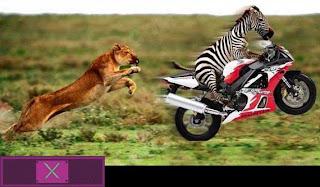 Animal vs Motorbike