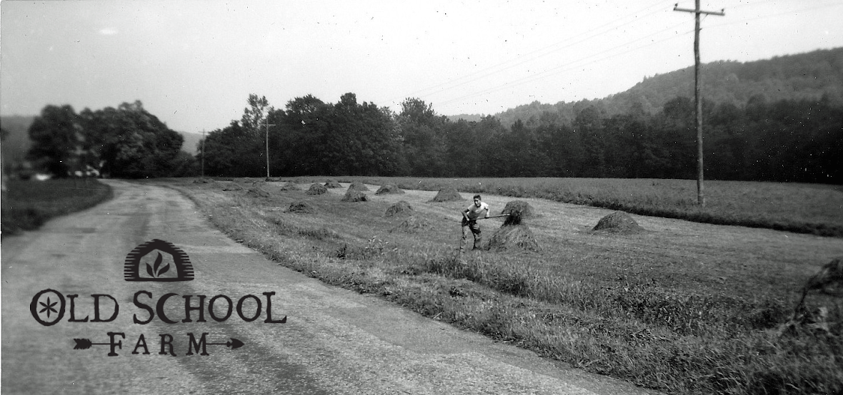 Old School Farm Blog