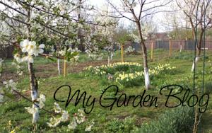 Moreni Garden
