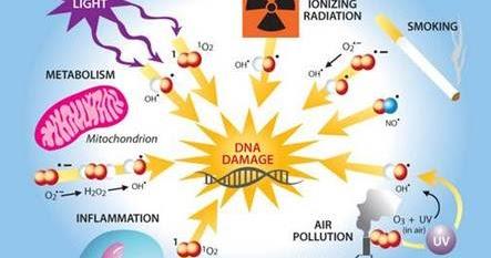 Peranan Antioksidan dalam Pencegahan Kanker | Tips-Cara ...
