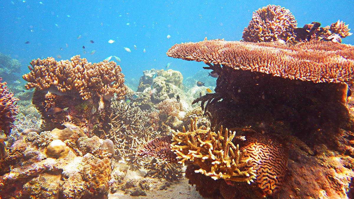Tenau sea's underwater