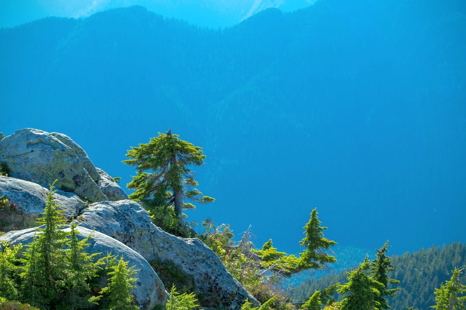Горы на севере благодаря дымке окрашены в ярко синий цвет. На их фоне сочная зелень молодых альпийских елей выглядит ослепительно.