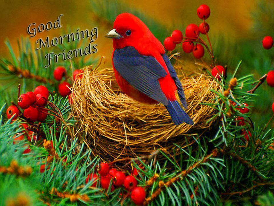 good morning friends nice morning