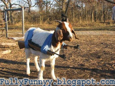 Funny Goat World Most Wanted Terrorist Goat