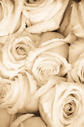 Just Some Cool Pictures (roses sepia light)