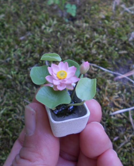 Pim S Mini Plants How I Make Miniature Water Lily And Lotus