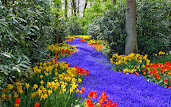 #6 Greatest Flowers Wallpaper HD
