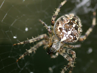 spider close up (21)