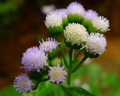 Chữa viêm mũi dị ứng bằng cây thuốc tự nhiên