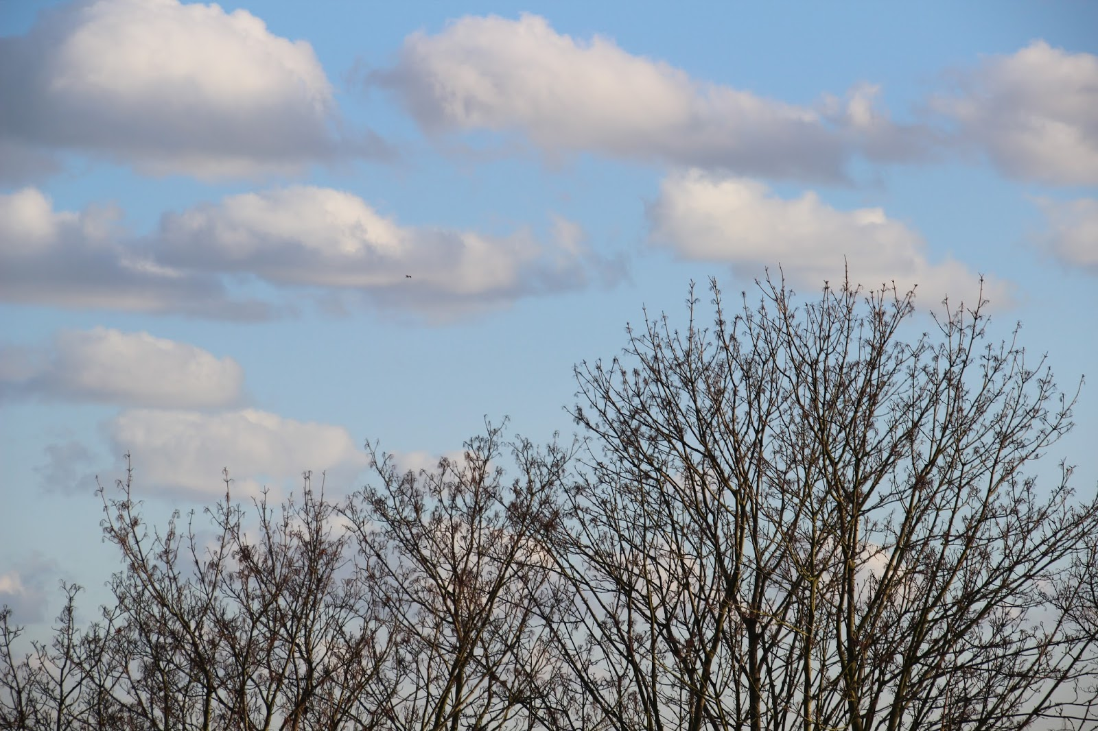 Pretty blue sky and trees