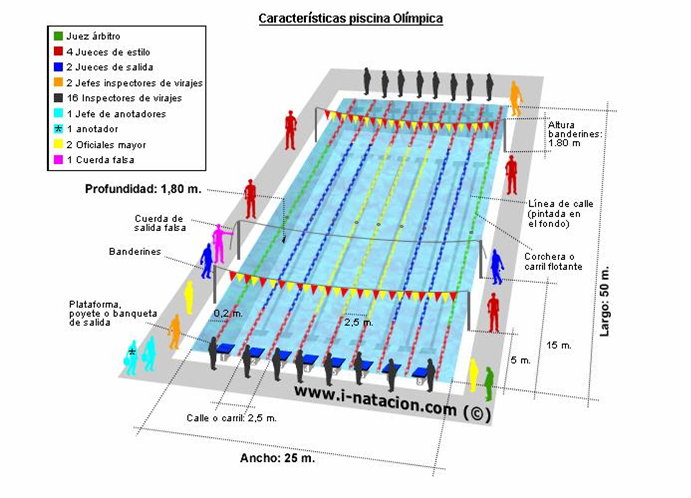 Natacion como es una piscina olimpica for Cuanto cuesta hacer una pileta de natacion