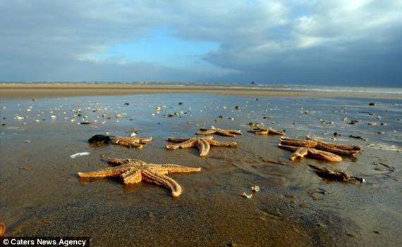 Étrange pluie le 1 Janvier 2011 - Page 13 Starfish02