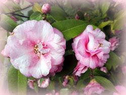 Mon album de fleurs