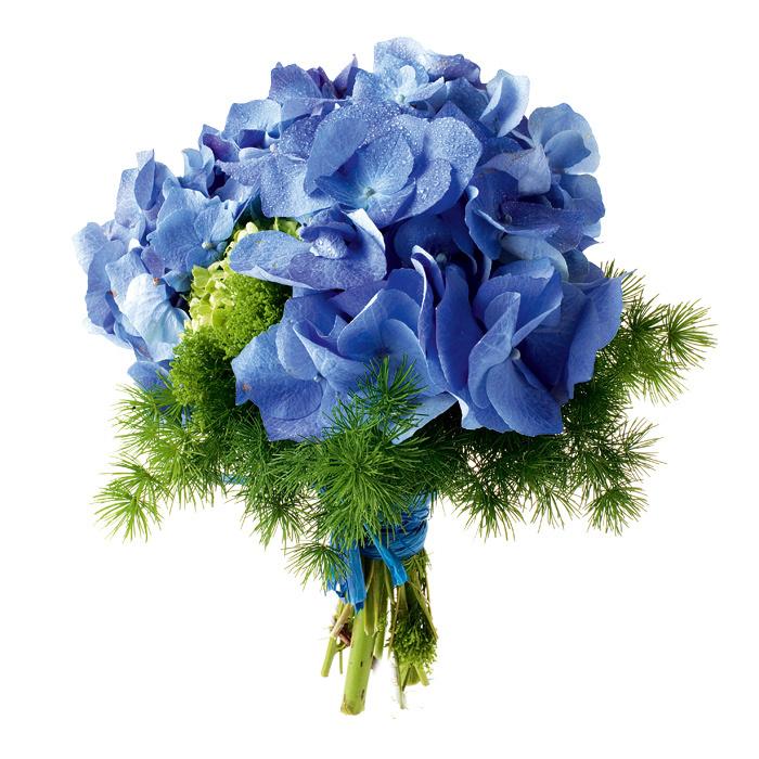 Картинки розы голубые