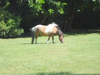 No es tan habitual en las islas, pero este está tan acostumbrado y es muy cariñoso con los vecinos.