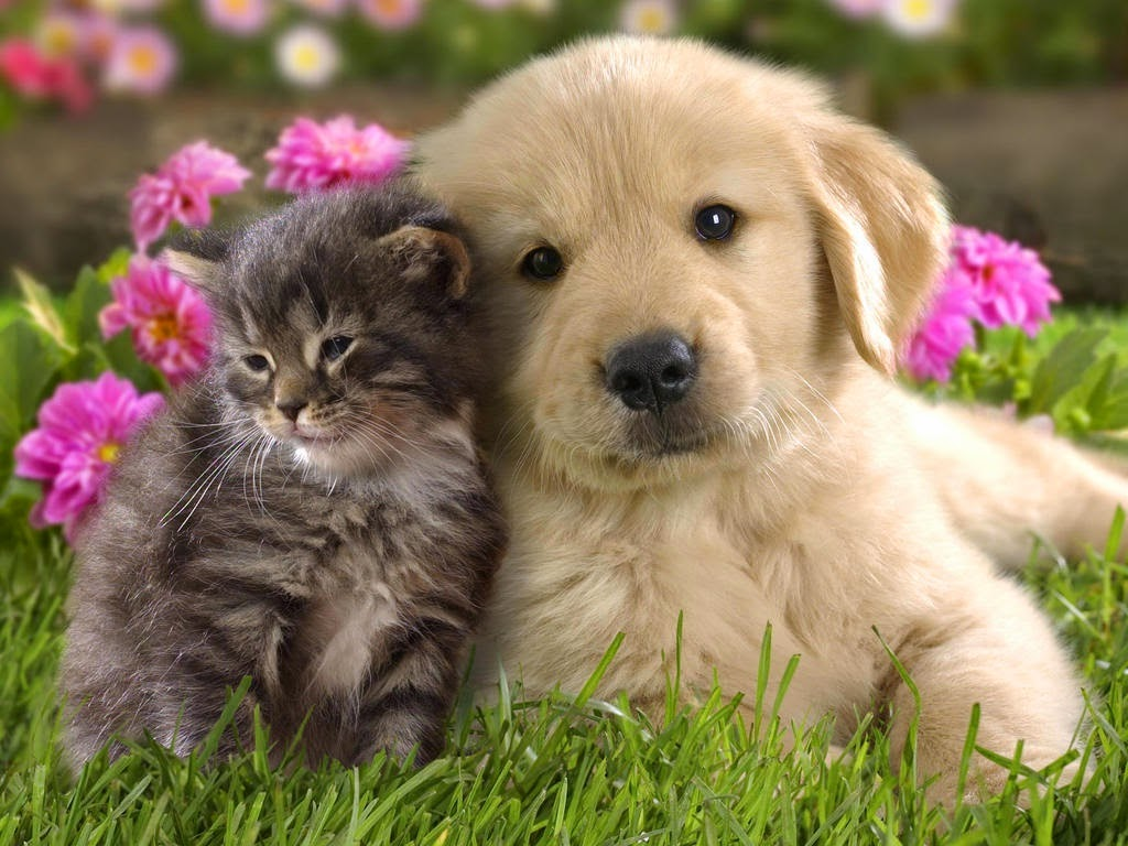 Rules of the Jungle Funny cute puppies and kittens