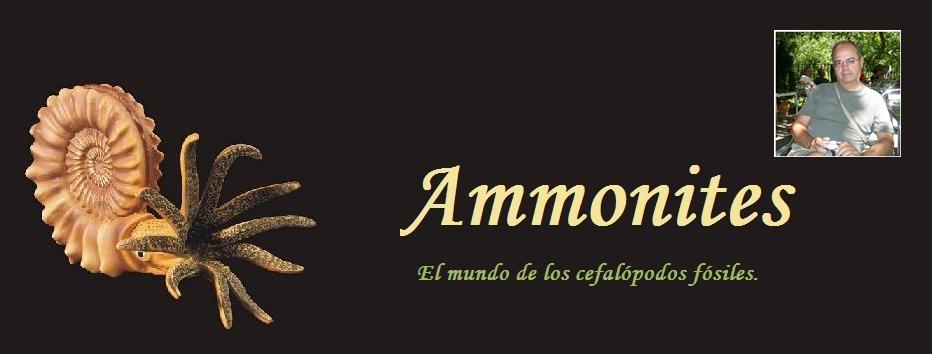 Ammonites y otros fósiles.