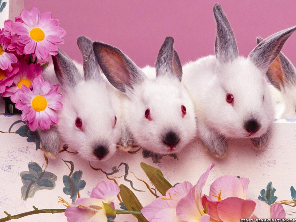 bunny computer wallpapers - photo #27