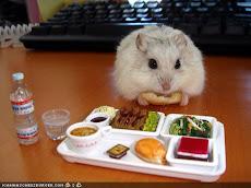 Funny Hamster!