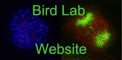 Bird Lab Website
