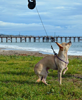 Ru demonstrates the Flexi Mini leash on the beach
