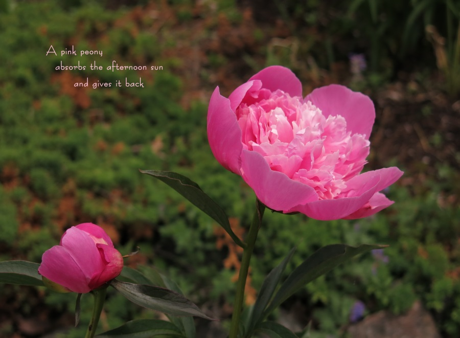 http://fineartamerica.com/featured/peony-glow-tim-beebe.html