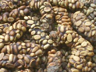 beli kopi luwak di sini memang lebih murah meskipun demikian bukan karena mutu kopi luwak kami kurang bagus, sebelum beli kopi luwak perlu di ketahui dari manakah asal kopi luwak tersebut, kalau anda sudah memahami tentu saja jika beli kopi luwak di daerah penghasil biji kopi terbesar yang banyak terdapat kopi luwak maka tentu saja harga kopi luwak nya akan lebih murah,<br /> kami adalah petani kopi di pagaralam sumatera selatan indonesia, daerah kami adalah daerah penghasil kopi terbesar di indonesia, karena masih banyak hutan rimba maka di sini banyak terdapat binatang luwak,<br /> maka di setiap perkebunan kopi milik rakyat yang di dekat lereng bukut sering di temukan kopi luwak,