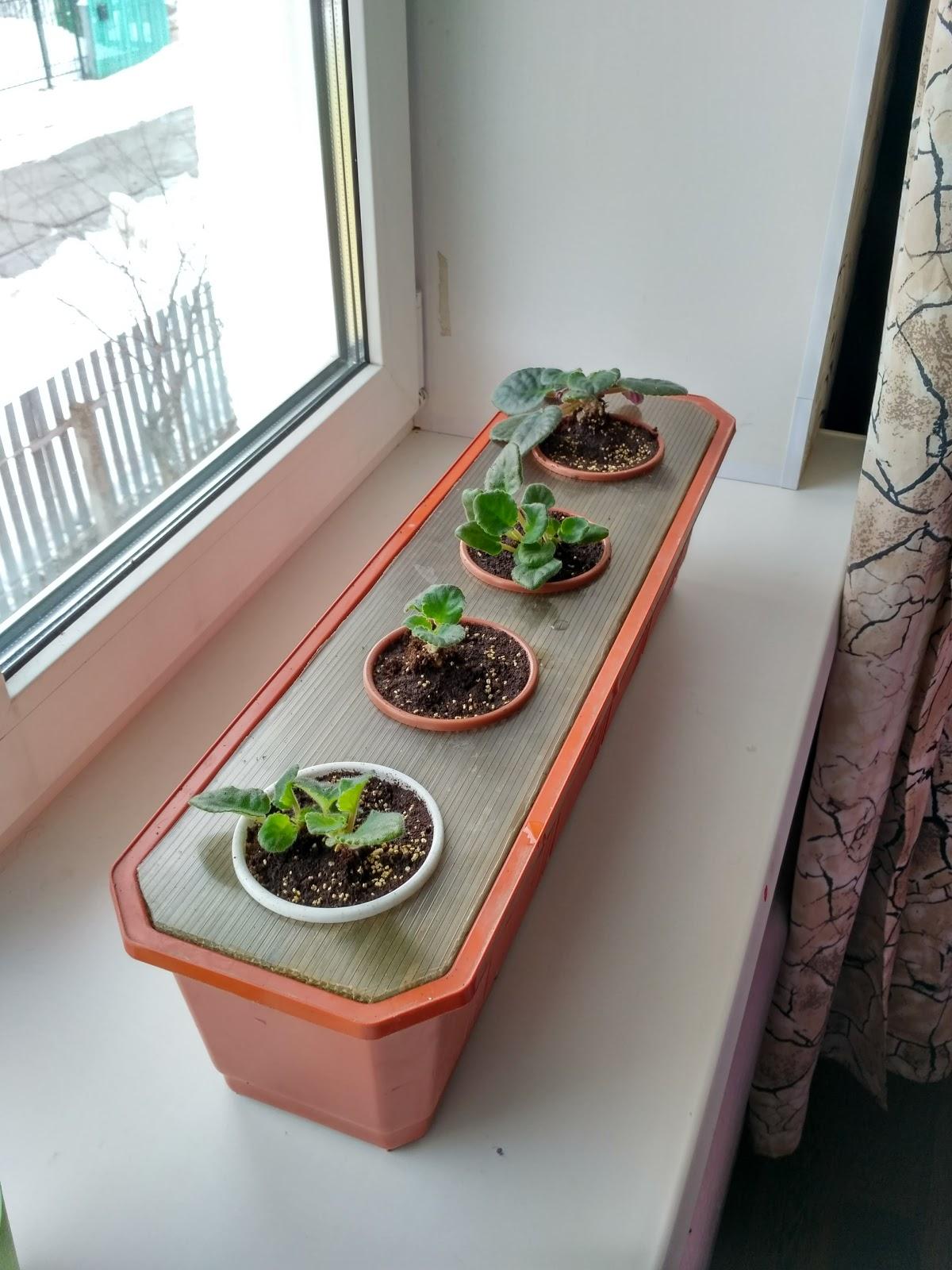 Как подобрать горшки для фиалок, чтобы посадить цветы правильно? 7