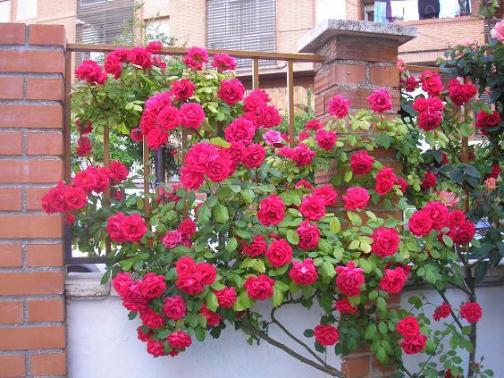 El jardin de pepa rosales de pepa for Astillas de madera para jardin