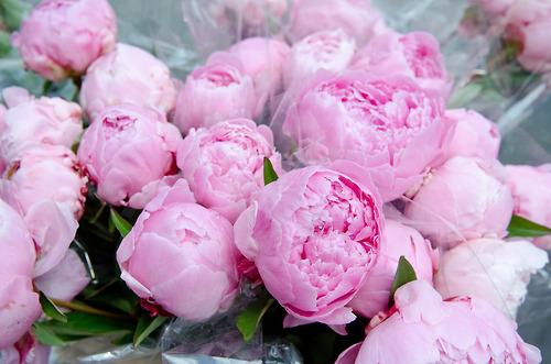 http://2.bp.blogspot.com/-Z55RqvHi6mw/UTm9XBvHcQI/AAAAAAAARxY/1RVR4HLMrD8/s1600/Happy+Women's+Day+flowers+bouquet+pink+peonies+001.jpg