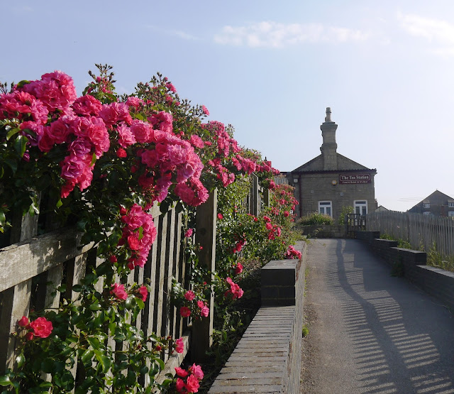 Pink Flowers and Tea Rooms