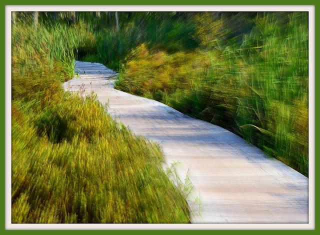Great Swamp of Wenham Massachusetts boardwalk