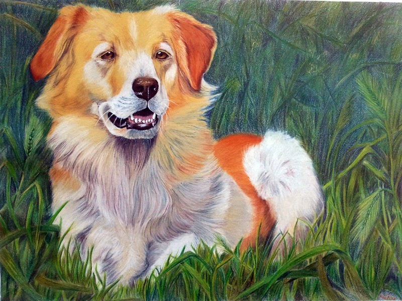 Shana golden retriever matite derwent artists drawing carta canson ritratto cane