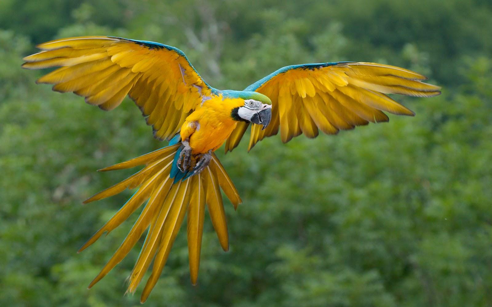 aves-exoticas_01.jpg