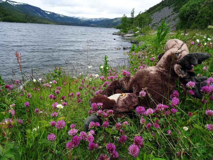 Bergen trip: sowa łoś i jezioro
