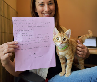 cat and letter