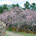 Ruta: Almendros en flor - Santiago del Teide - Arguayo