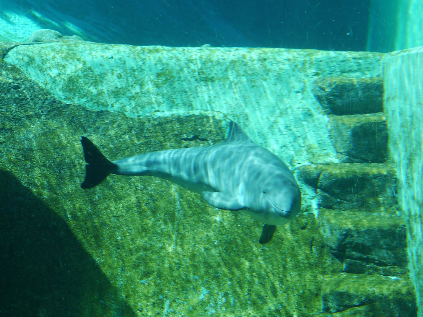 Fish aquarium vancouver - Hello River Porpoise