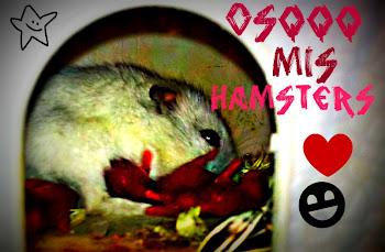 mis hamstercillos