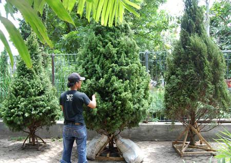 omegaart: sejarah singkat pohon natal