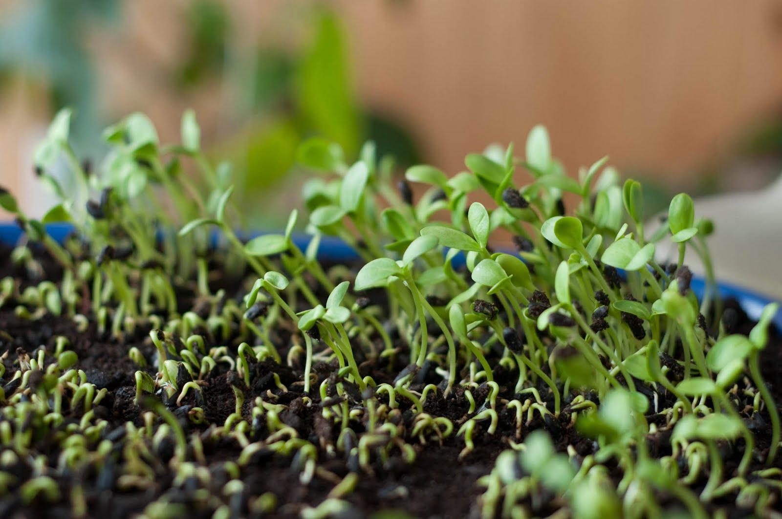 Pousse jeune plante plant for Plante 150 maladies madagascar