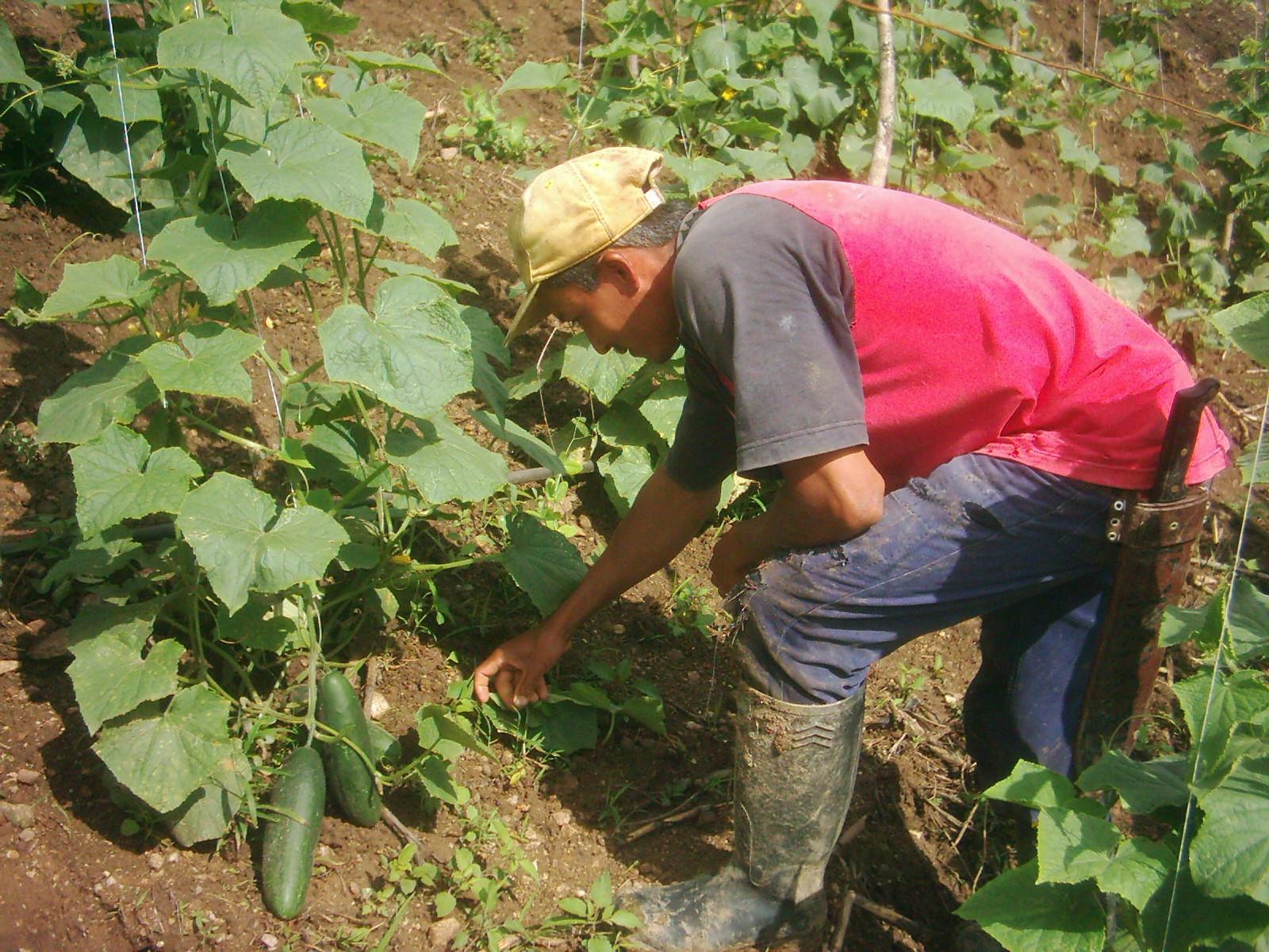 Imagenes De Campesinos