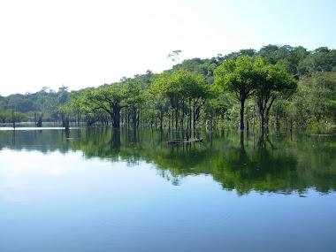 Maués