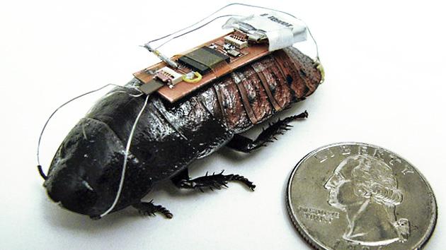 las cibercucarachas heredaran la tierra