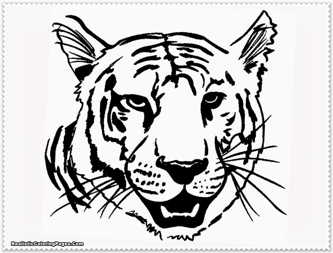 Realistic Tiger Coloring Pages Realistic Coloring Pages Tiger Coloring Pages To Print