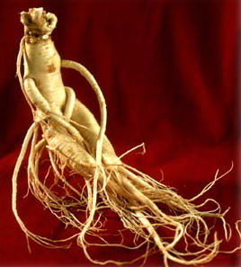 Panax ginseng is a medicinal plant in the region is cold.